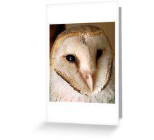 BARN OWL - Tyto alba Greeting Card