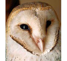 BARN OWL - Tyto alba Photographic Print