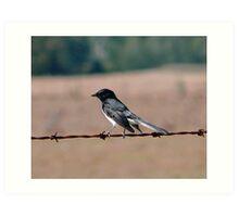 Bird on a wire. Art Print