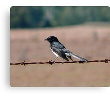 Bird on a wire. Canvas Print