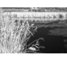 Feather Grass Monocle Photographic Print