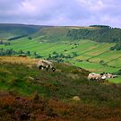 Fryup Dale by Trevor Kersley