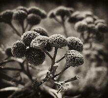 Botanica by Mikhail Palinchak