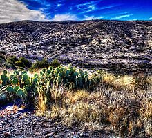 Along the Cave Creek Trail IV by Roger Passman