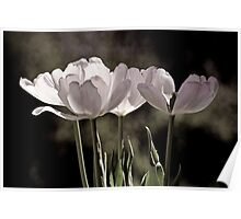 Love is a Tulip Poster