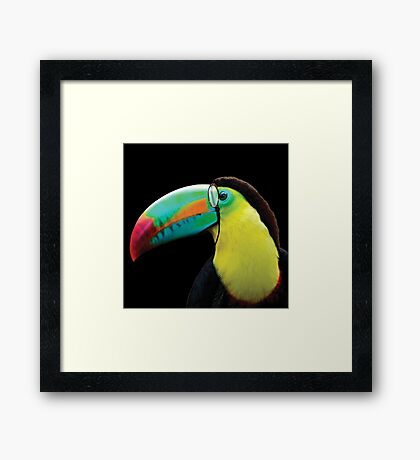Toucan with Monocle Framed Print