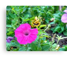 Petunia flower 6 Canvas Print