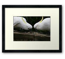 Mirror Mirror Cockatoos Framed Print