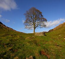 The Sycamore Tree at Sycamore Gap by Paul Bettison