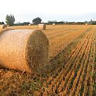 After the Harvest by Mike Paget