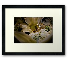 Daisys and Rings Framed Print