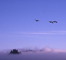 Rialto Beach, Olympia Penninsula, Washington by fauselr