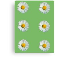 Six white daisies Canvas Print