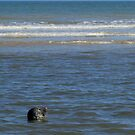 Seal by Mike Paget