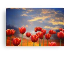 Tulip Sunset Canvas Print