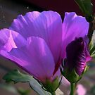 Purple flower and bud by ienemien