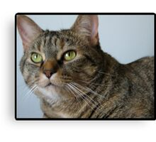 Wiskers Canvas Print