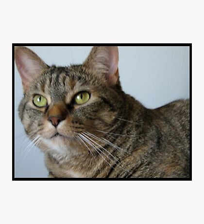 Wiskers Photographic Print