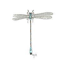 Blue Dragonfly by Tracy Foltz