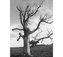 deadwood tree  Photographic Print