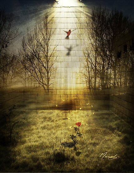 Just Imagine by Manolya  F.