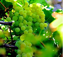 Delicious Grapes Photographic Print