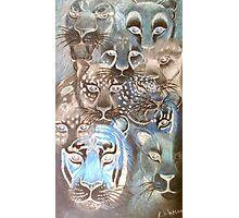 mystic cats Photographic Print