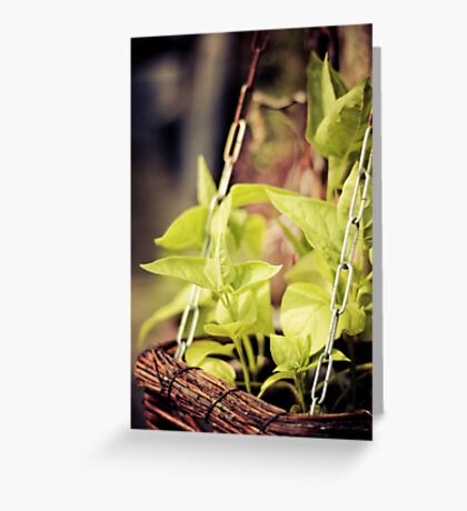 spicy greens Greeting Card