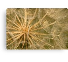 Delicate Seedhead Canvas Print