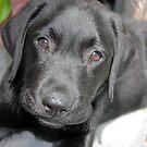 Puppy Eyes by Nori Bucci