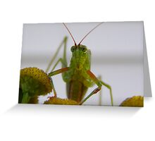 Did you need something? Greeting Card