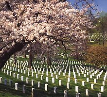 Arlington National Cemetery 4 by Kenshots