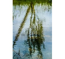 Tree reflected in water  Photographic Print