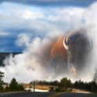 Yellowstone Buffalo by Gene Praag