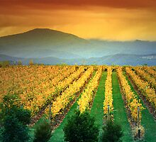 Mount St Leonard and Vinyard, Yarra Valley. by Ern Mainka