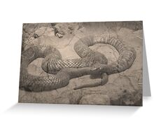 Aged Collett's Snake (pseuduchis colletti) Greeting Card