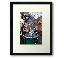 Dogs with game face on .30 Framed Print