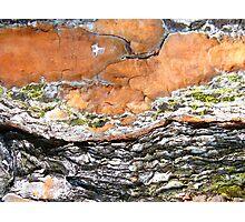 UNIQUE PATTERNS OF NATURE Photographic Print