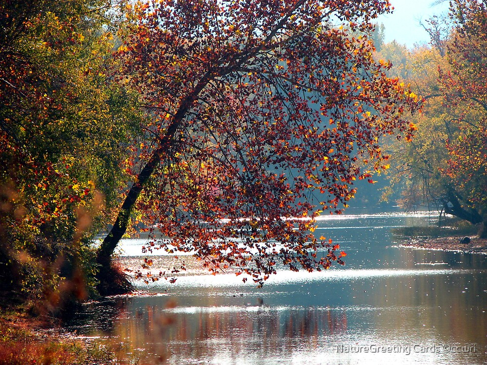 Tranquil Serenity by NatureGreeting Cards ©ccwri