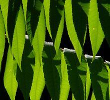 Line Dancin' Leaf People by Len Bomba