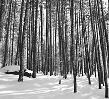 Winter Trees, Black and White by JoCzech