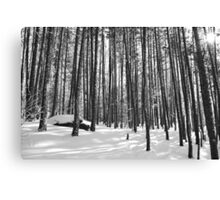 Winter Trees, Black and White Canvas Print