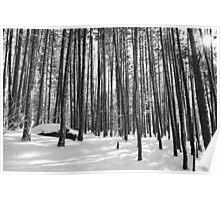 Winter Trees, Black and White Poster