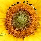 Corona Radiata by Alice Kahn