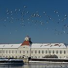 High Flying at Nymphenburg Palace by Kasia-D