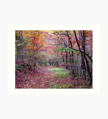 A Forest Path Art Print
