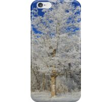 Frost on Rural Trees iPhone Case/Skin