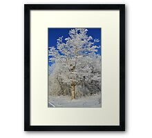Frost on Rural Trees Framed Print