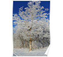 Frost on Rural Trees Poster