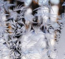 Frosted Window Landscape Sticker